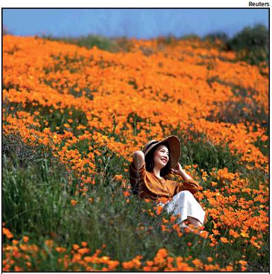 STUNNING SIGHT: A particularly wet winter has brought about an early poppy bloom near Lake Elsinore in southern California